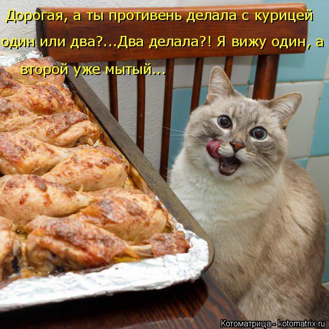 Котоматрица: Дорогая, а ты противень делала с курицей один или два?...Два делала?! Я вижу один, а  второй уже мытый...