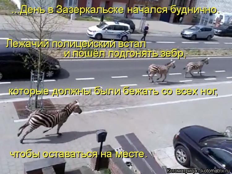 Котоматрица: ...День в Зазеркальске начался буднично. Лежачий полицейский встал и пошёл подгонять зебр, которые должны были бежать со всех ног, чтобы ост?