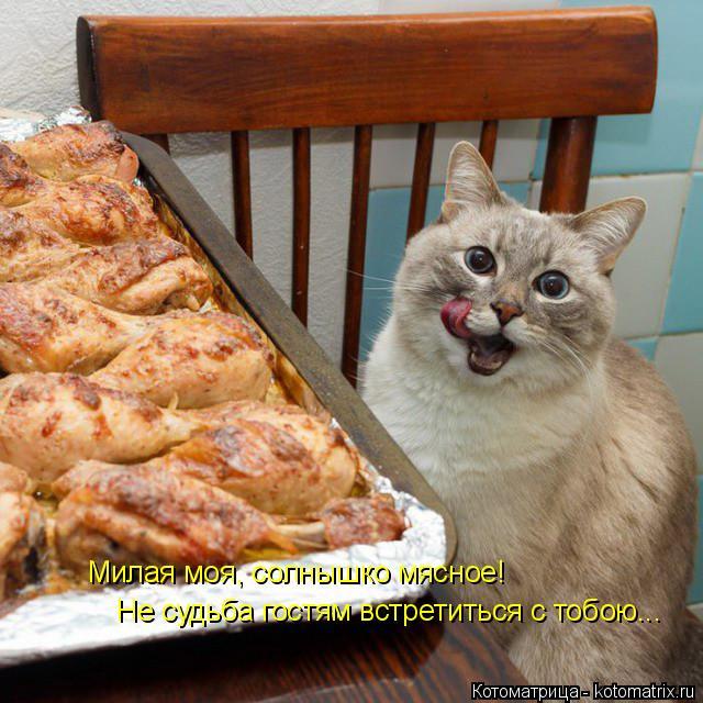 Котоматрица: Милая моя, солнышко мясное! Не судьба гостям встретиться с тобою...
