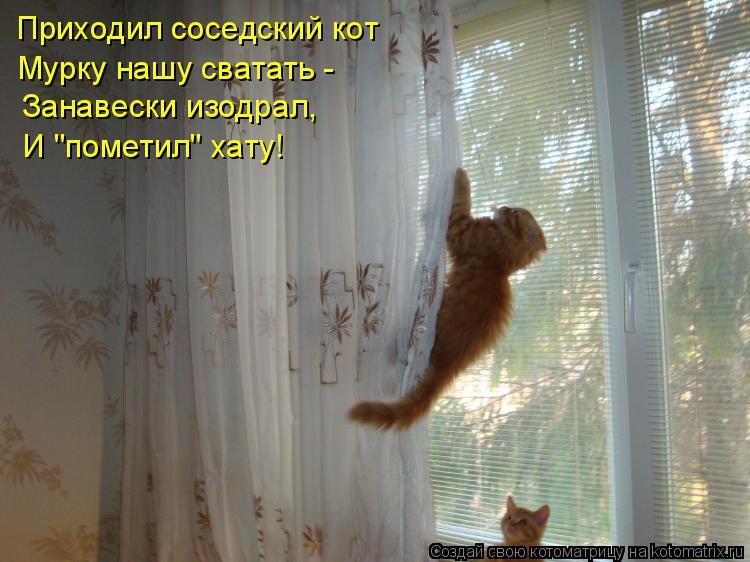 """Котоматрица: Приходил соседский кот  Занавески изодрал, И """"пометил"""" хату! Мурку нашу сватать -"""