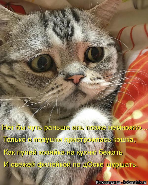 Котоматрица: Нет бы чуть раньше иль позже немножко.... Только в подушки пристроилась кошка, Как пулей хозяйка на кухню бежать И свежей филейкой по дОске ш?
