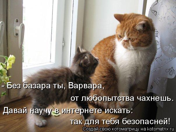 Котоматрица: - Без базара ты, Варвара, от любопытства чахнешь. Давай научу в интернете искать: так для тебя безопасней!