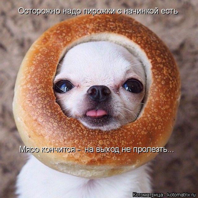Котоматрица: Осторожно надо пирожки с начинкой есть Мясо кончится -  на выход не пролезть...
