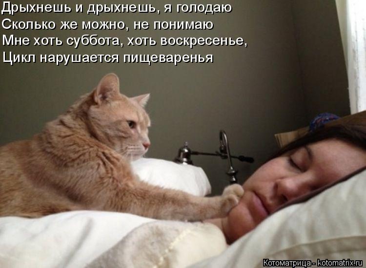 Котоматрица: Дрыхнешь и дрыхнешь, я голодаю  Сколько же можно, не понимаю  Мне хоть суббота, хоть воскресенье, Цикл нарушается пищеваренья
