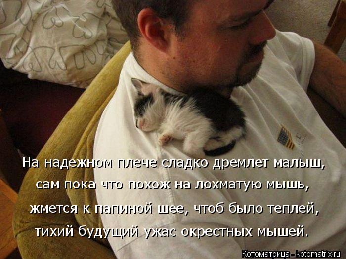 Котоматрица: На надежном плече сладко дремлет малыш, сам пока что похож на лохматую мышь, жмется к папиной шее, чтоб было теплей, тихий будущий ужас окрес