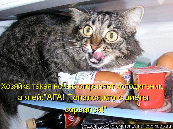 """Котоматрица: Хозяйка такая ночью открывает холодильник, а я ей:""""АГА! Попался,кто с диеты  сорвался!"""""""