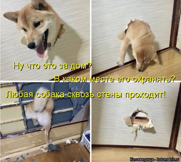 Котоматрица: Ну что это за дом? В каком месте его охранять? Любая собака сквозь стены проходит!