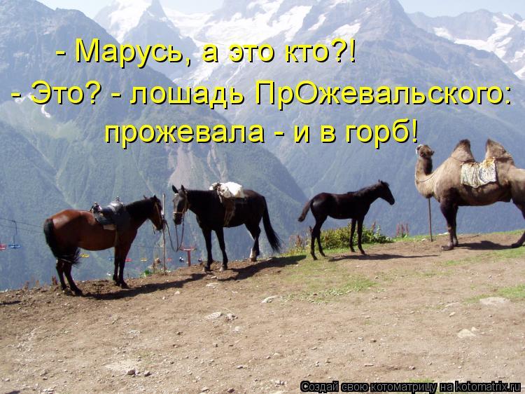 Котоматрица: - Марусь, а это кто?! - Это? - лошадь ПрОжевальского: прожевала - и в горб!