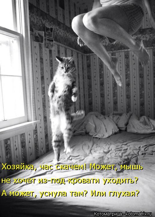 Котоматрица: не хочет из-под кровати уходить? Хозяйка, час скачем! Может, мышь А может, уснула там? Или глухая?