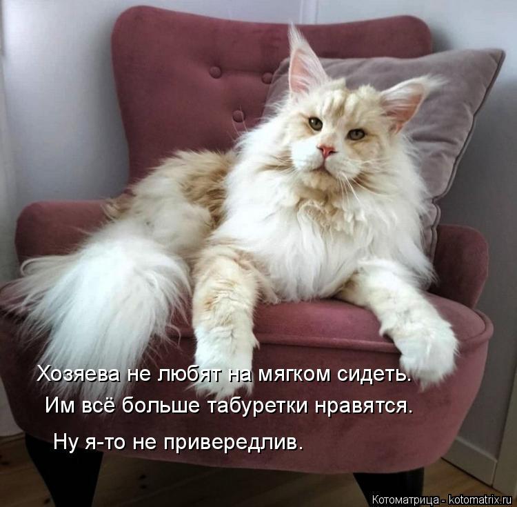 Котоматрица: Хозяева не любят на мягком сидеть. Им всё больше табуретки нравятся. Ну я-то не привередлив.