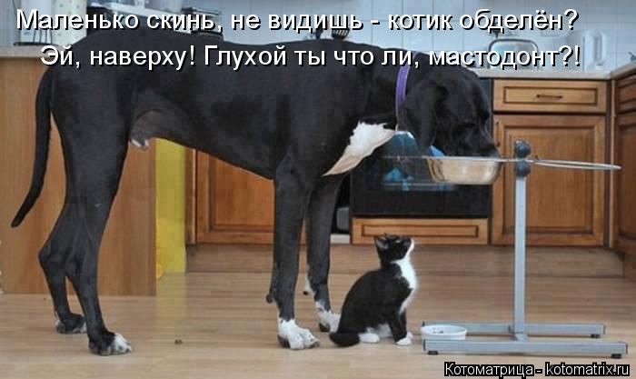 Котоматрица: Маленько скинь, не видишь - котик обделён? Эй, наверху! Глухой ты что ли, мастодонт?!