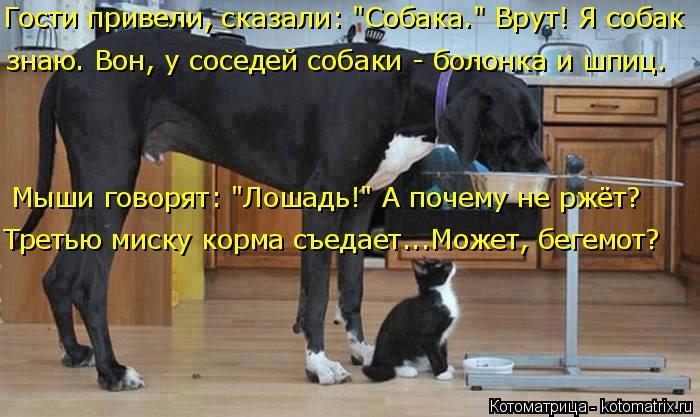 """Котоматрица: Гости привели, сказали: """"Собака."""" Врут! Я собак знаю. Вон, у соседей собаки - болонка и шпиц. Мыши говорят: """"Лошадь!"""" А почему не ржёт? Третью миск"""