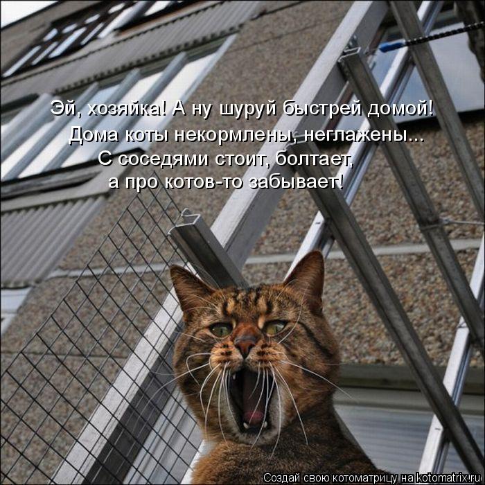 Котоматрица: Эй, хозяйка! А ну шуруй быстрей домой! Дома коты некормлены, неглажены... С соседями стоит, болтает, а про котов-то забывает!