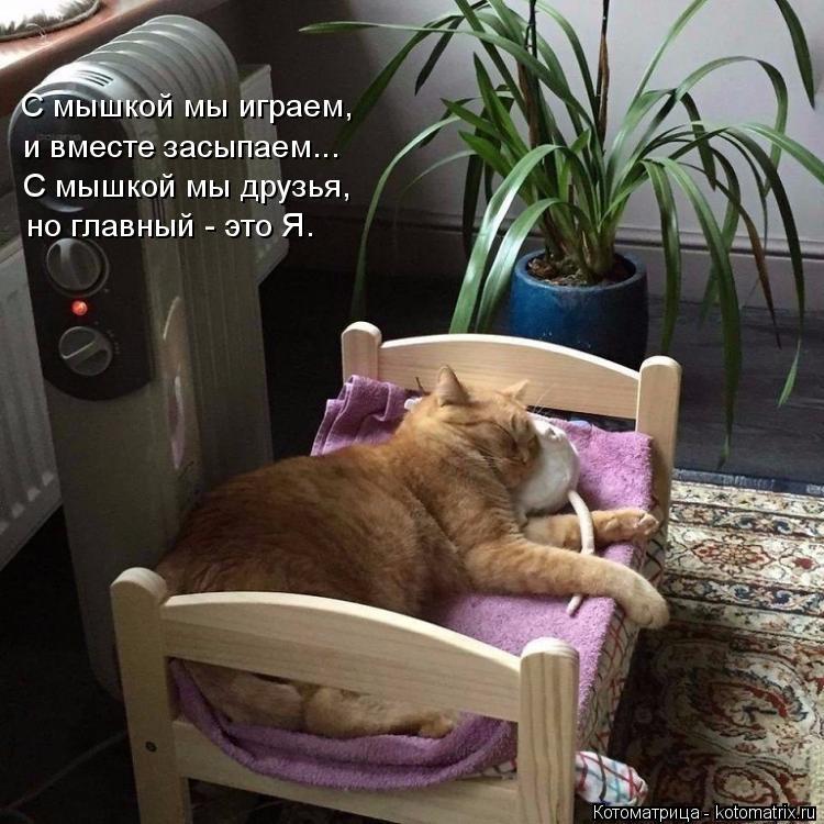 Котоматрица: С мышкой мы играем,  и вместе засыпаем... С мышкой мы друзья,  но главный - это Я.