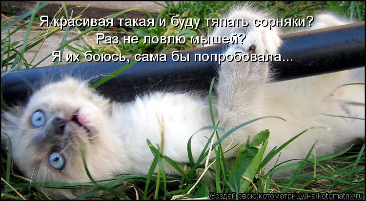 Котоматрица: Я красивая такая и буду тяпать сорняки? Раз не ловлю мышей? Я их боюсь, сама бы попробовала...