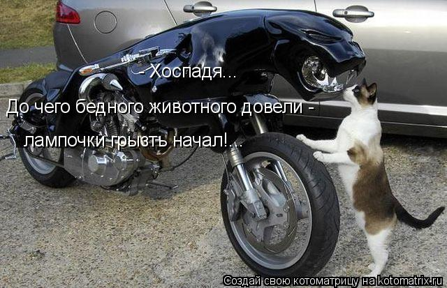 Котоматрица: До чего бедного животного довели - - Хоспадя...  лампочки грызть начал!...