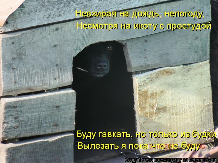 Котоматрица: Невзирая на дождь, непогоду, Несмотря на икоту с простудой Буду гавкать, но только из будки Вылезать я пока что не буду