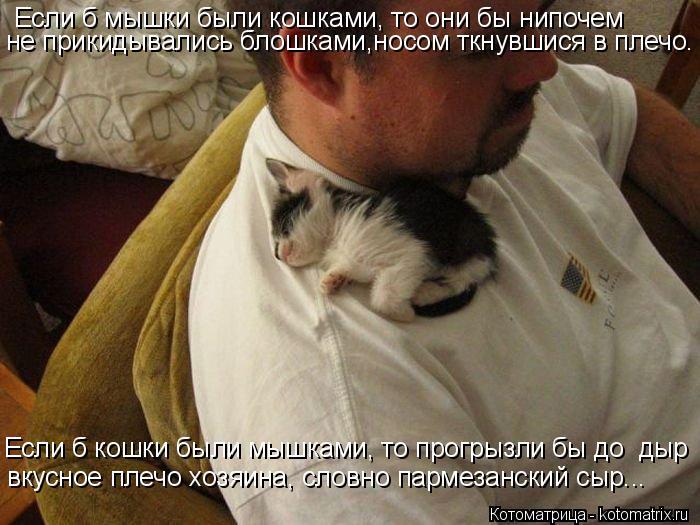 Котоматрица: Если б мышки были кошками, то они бы нипочем не прикидывались блошками,носом ткнувшися в плечо. Если б кошки были мышками, то прогрызли бы до
