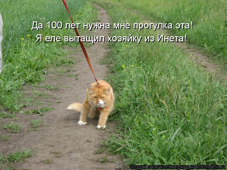 Котоматрица: Да 100 лет нужна мне прогулка эта! Я еле вытащил хозяйку из Инета!
