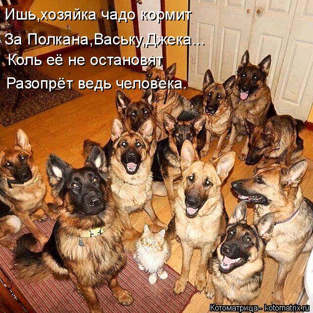Котоматрица: Разопрёт ведь человека. Коль её не остановят Ишь,хозяйка чадо кормит За Полкана,Ваську,Джека...