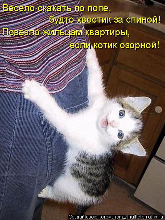 Котоматрица: Весело скакать по попе, будто хвостик за спиной! Повезло жильцам квартиры, если котик озорной!