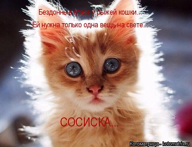 Котоматрица: Бездонные глаза у рыжей кошки... Бездонные глаза у рыжей кошки... Ей нужна только одна вещь на свете... СОСИСКА...