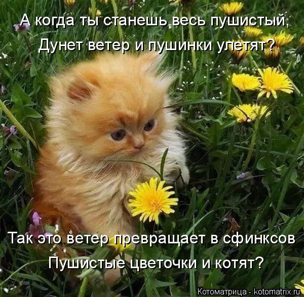 Котоматрица: А когда ты станешь весь пушистый,  Дунет ветер и пушинки улетят? Так это ветер превращает в сфинксов Пушистые цветочки и котят?