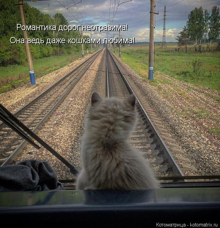 Котоматрица: Романтика дорог неотразима! Она ведь даже кошками любима!