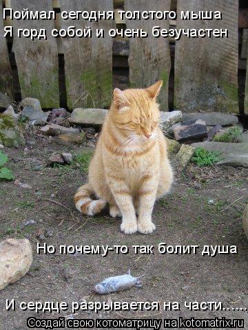 Котоматрица: Поймал сегодня толстого мыша Я горд собой и очень безучастен Но почему-то так болит душа И сердце разрывается на части..............