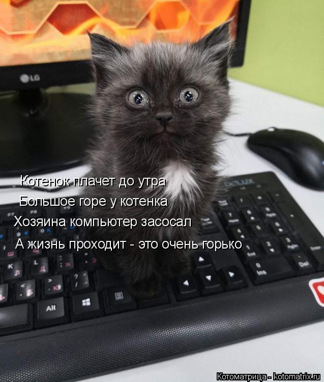 Котоматрица: Котенок плачет до утра Большое горе у котенка   Хозяина компьютер засосал А жизнь проходит - это очень горько