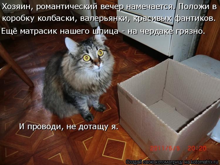 Котоматрица: Хозяин, романтический вечер намечается. Положи в  коробку колбаски, валерьянки, красивых фантиков.  Ещё матрасик нашего шпица - на чердаке г?