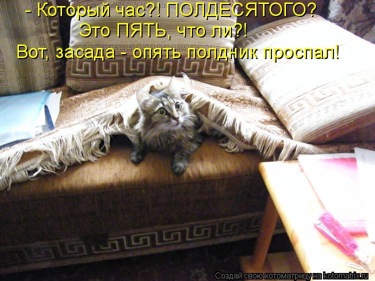 Котоматрица: - Который час?! ПОЛДЕСЯТОГО? Это ПЯТЬ, что ли?! Вот, засада - опять полдник проспал!