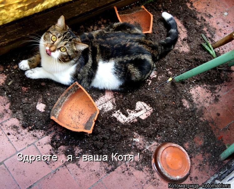 Котоматрица: Здрасте , я - ваша Котя !