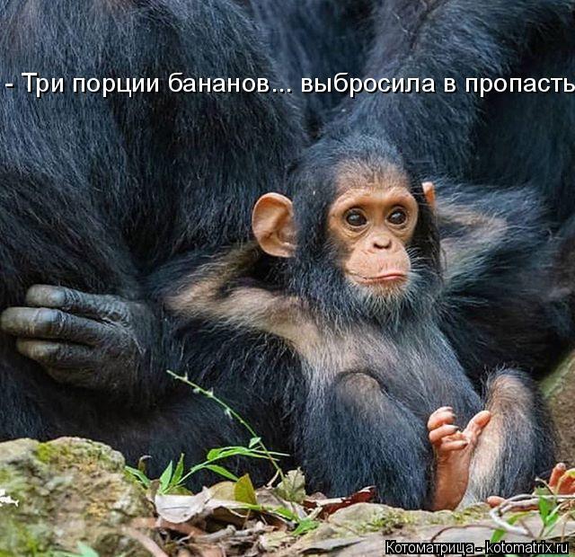 Котоматрица: - Три порции бананов... выбросила в пропасть