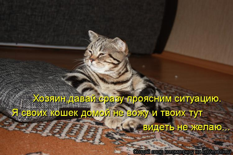 Котоматрица: Хозяин,давай сразу проясним ситуацию. Я своих кошек домой не вожу и твоих тут видеть не желаю...