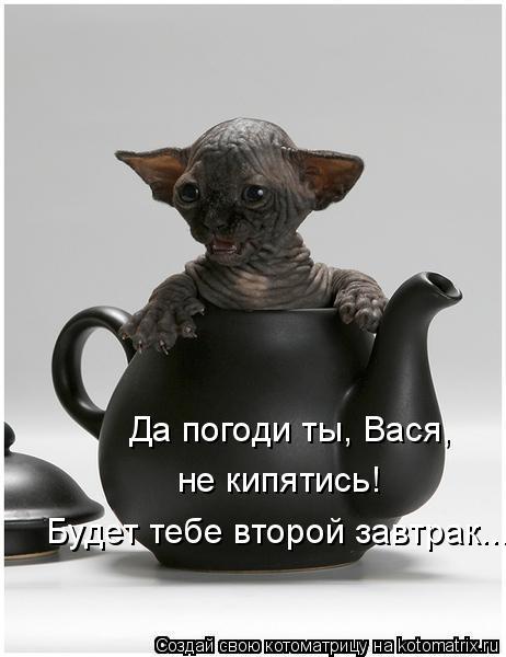 Котоматрица: Да погоди ты, Вася, не кипятись! Будет тебе второй завтрак...