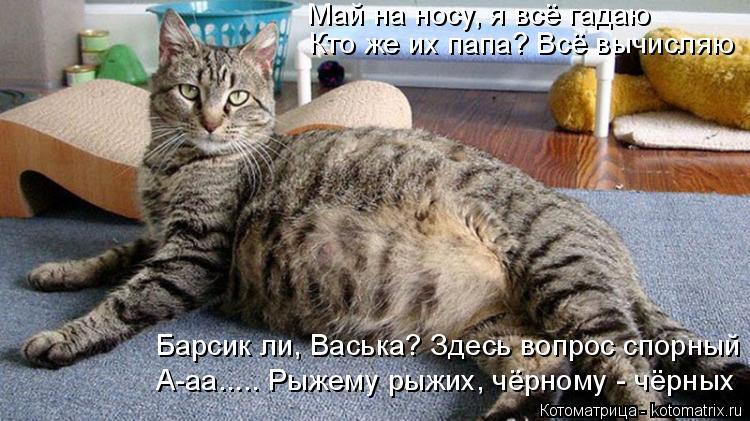 Котоматрица: Май на носу, я всё гадаю Кто же их папа? Всё вычисляю Барсик ли, Васька? Здесь вопрос спорный А-аа..... Рыжему рыжих, чёрному - чёрных