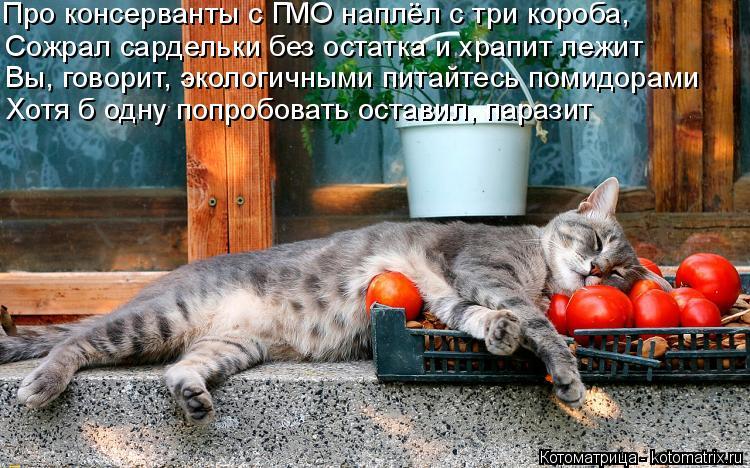 Котоматрица: Про консерванты с ГМО наплёл с три короба, Сожрал сардельки без остатка и храпит лежит  Вы, говорит, экологичными питайтесь помидорами Хотя