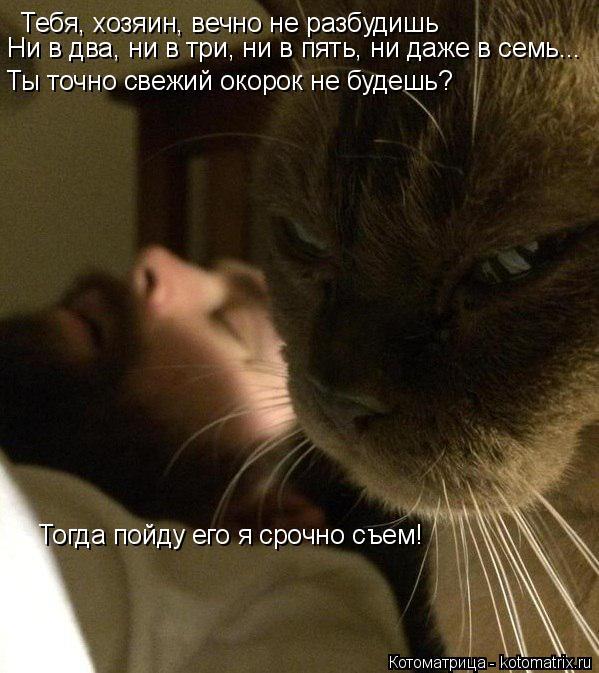 Котоматрица: Тебя, хозяин, вечно не разбудишь  Ни в два, ни в три, ни в пять, ни даже в семь... Ты точно свежий окорок не будешь? Тогда пойду его я срочно съем!