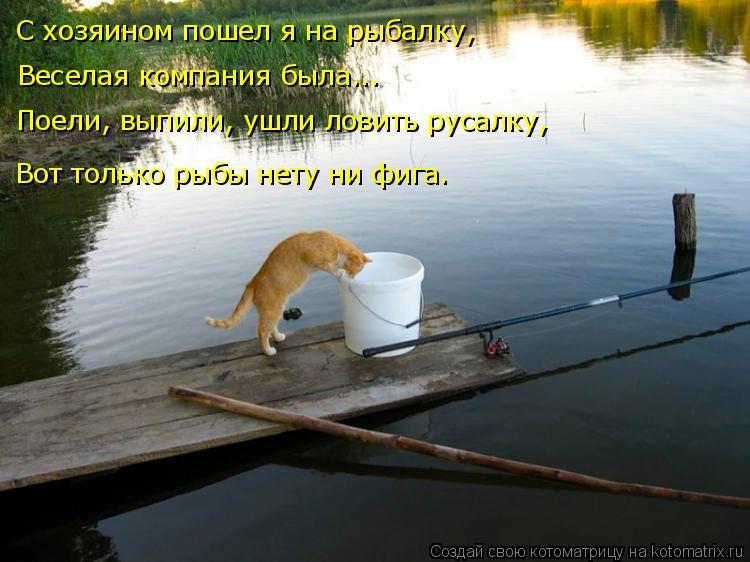 Котоматрица: С хозяином пошел я на рыбалку, Веселая компания была... Вот только рыбы нету ни фига. Поели, выпили, ушли ловить русалку,