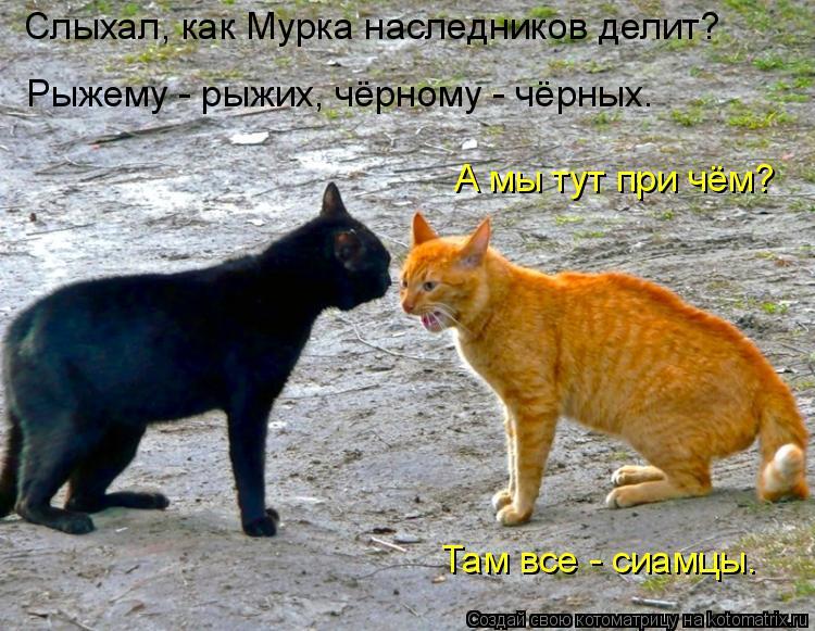 Котоматрица: Слыхал, как Мурка наследников делит? Рыжему - рыжих, чёрному - чёрных. А мы тут при чём? Там все - сиамцы.