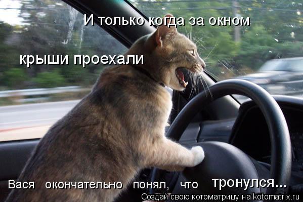Котоматрица: тронулся... Вася   окончательно   понял,   что  � только когда за окном крыши проехали