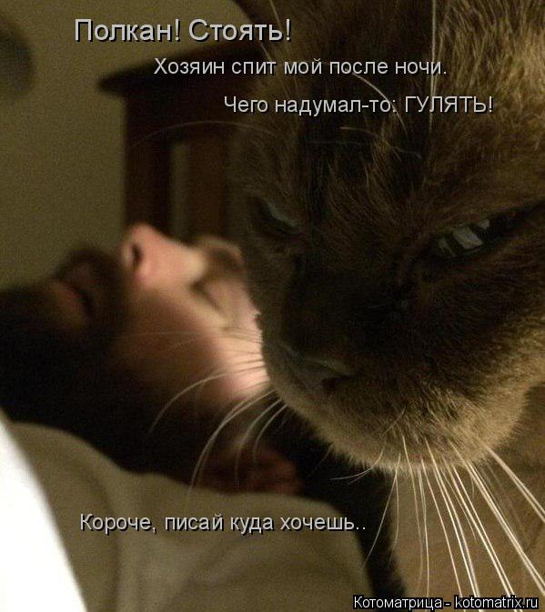 Котоматрица: Короче, писай куда хочешь.. Полкан! Стоять! Чего надумал-то: ГУЛЯТЬ! Хозяин спит мой после ночи.