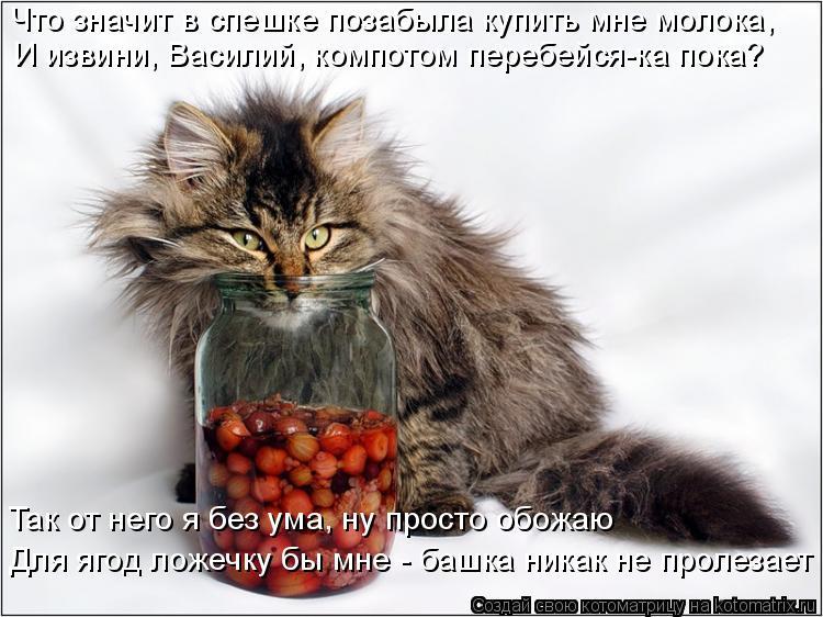 Котоматрица: Что значит в спешке позабыла купить мне молока, И извини, Василий, компотом перебейся-ка пока?  Так от него я без ума, ну просто обожаю  Для яг?