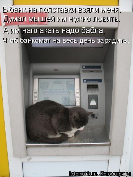 Котоматрица: В банк на полставки взяли меня. Думал мышей им нужно ловить. А им наплакать надо бабла, Чтоб банкомат на весь день зарядить!