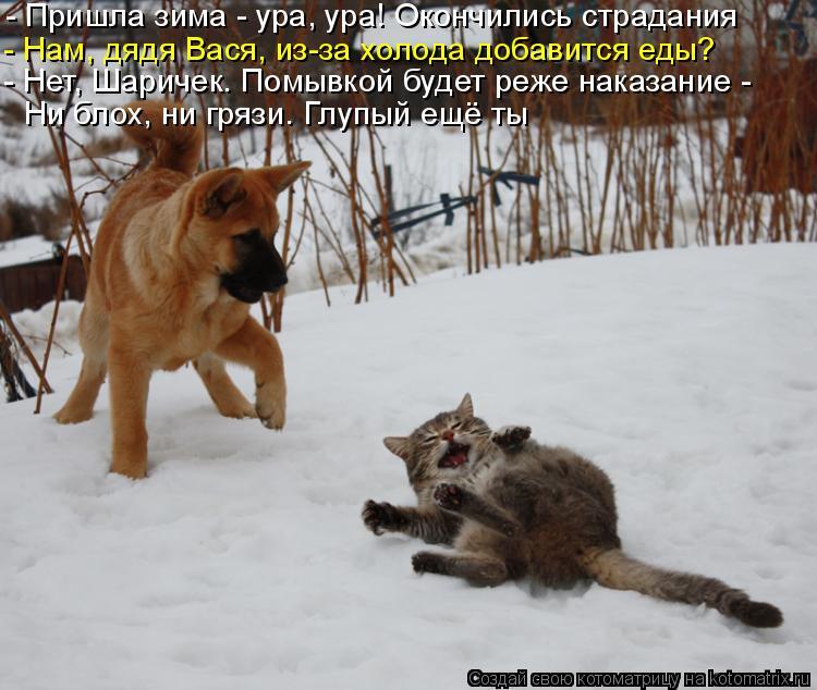 Котоматрица: - Пришла зима - ура, ура! Окончились страдания - Нам, дядя Вася, из-за холода добавится еды?  - Нет, Шаричек. Помывкой будет реже наказание - Ни бл
