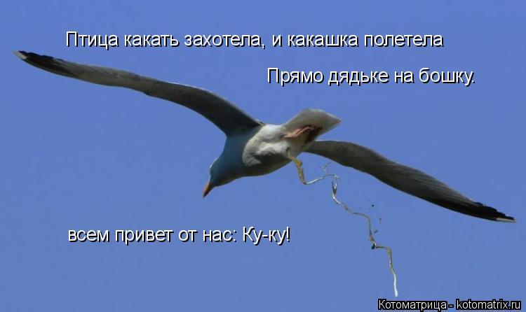 Котоматрица: Птица какать захотела, и какашка полетела Прямо дядьке на бошку.  всем привет от нас: Ку-ку!