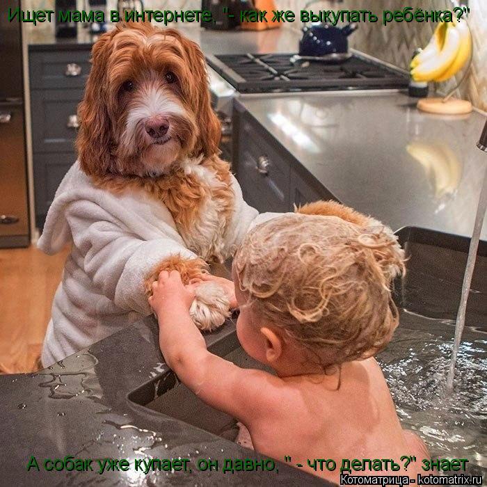 """Котоматрица: Ищет мама в интернете, """"- как же выкупать ребёнка?"""" А собак уже купает, он давно, """" - что делать?"""" знает"""