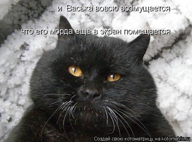Котоматрица: ... и  Васька вовсю возмущается что его морда ещё в экран помещается