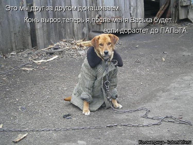 Котоматрица: Это мы друг за другом донашиваем. Конь вырос,теперь я,после меня Васька будет... если дорастет до ПАЛЬТА.